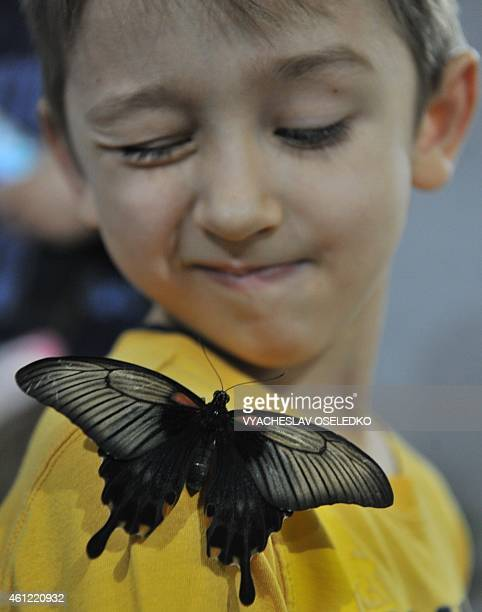 A butterfly lands on the shoulder of a boy during a butterflies exhibition in Bishkek on January 9 2015 AFP PHOTO / VYACHESLAV OSELEDKO