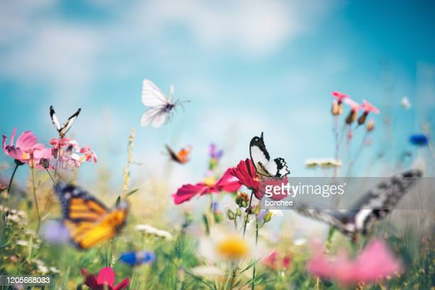 butterfly meadow - bright beautiful flowers stock pictures, royalty-free photos & images