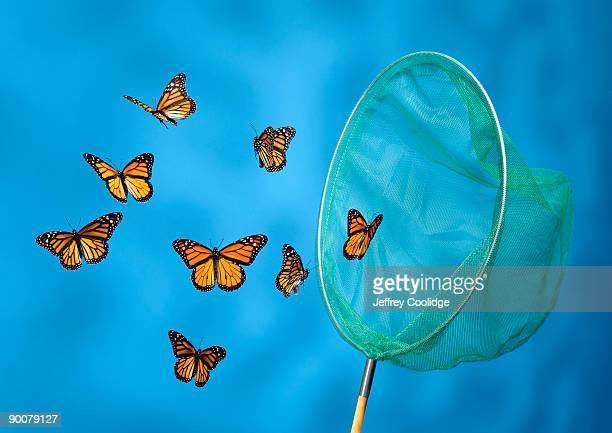 butterfly net catching butterflies - vangen stockfoto's en -beelden