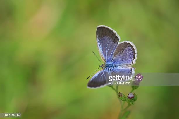 butterfly on a flower, indonesia - eén dier stockfoto's en -beelden