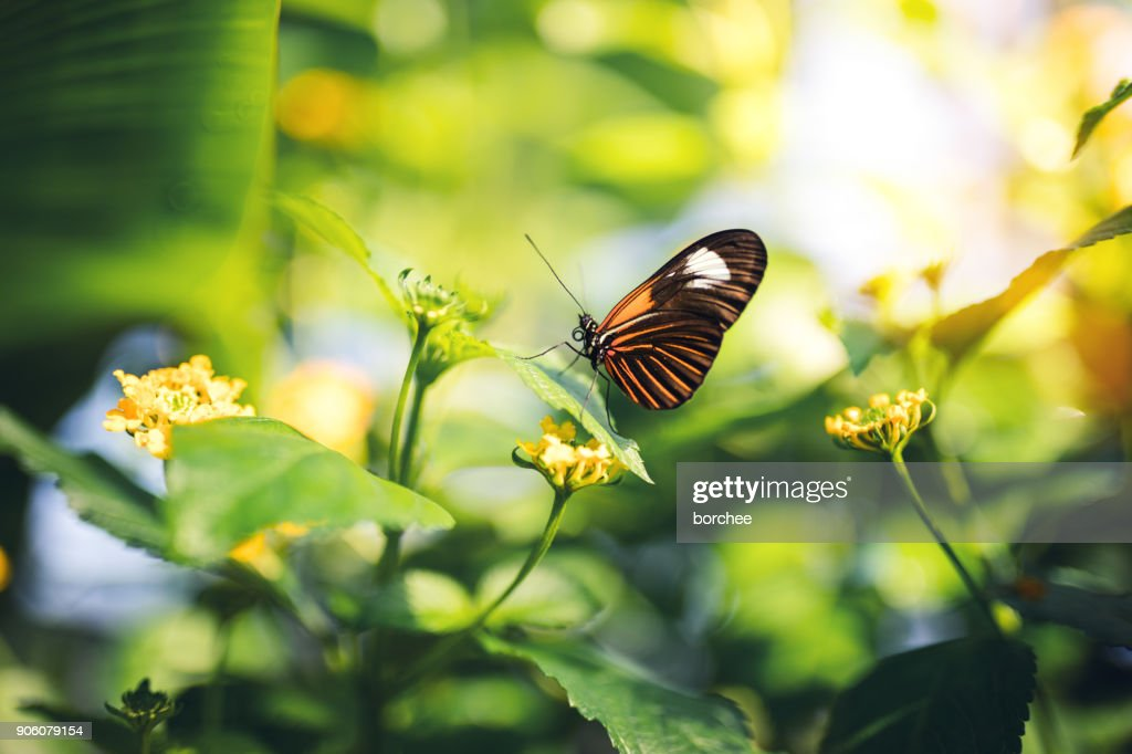 Butterfly On A Flower : Stock Photo