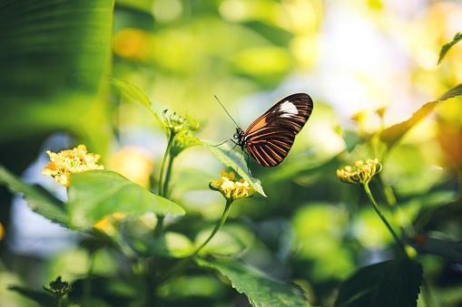 Butterfly On A Flower 906079154