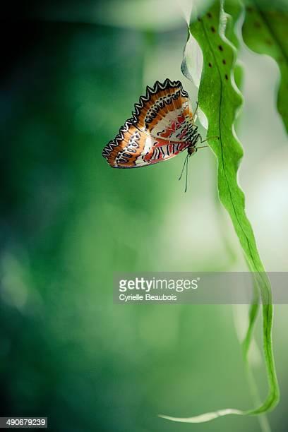 CONTENT] Butterfly on a leaf Botanical Garden of Montréal Québec Canada
