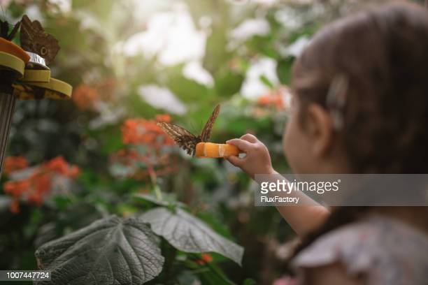 butterfly on a orange slice - zoo stock pictures, royalty-free photos & images