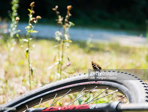 Butterfly On Cropped Bicycle Tire