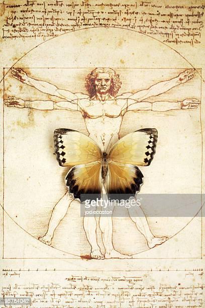 Schmetterling auf DaVinci Skizze eines Mannes