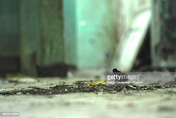 Butterfly On Floor In Abandoned Building