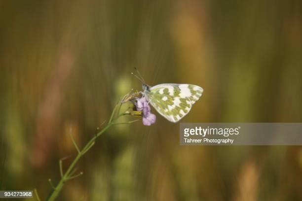 Butterfly on flowe