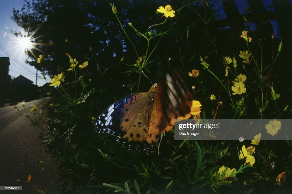 Butterfly on flower, close up : Stock Photo