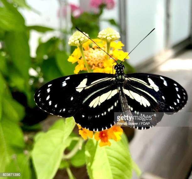 Butterfly on flower near window