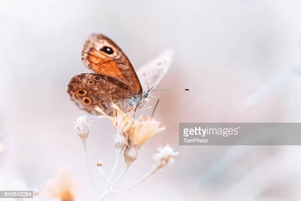 butterfly on flower, pastel colored image with copy space - gliedmaßen körperteile stock-fotos und bilder