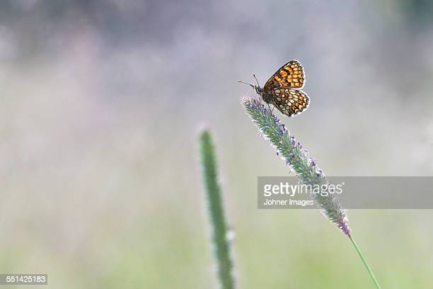 butterfly on flower - 2015 stockfoto's en -beelden