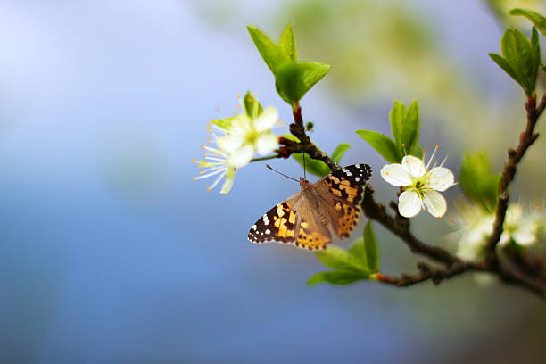 Butterfly on flowering tree branch