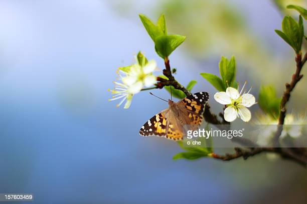 butterfly on flowering tree branch - frische stockfoto's en -beelden