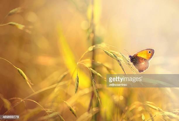 バタフライの芝生