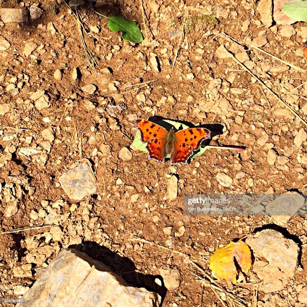Butterfly On Ground : Foto stock