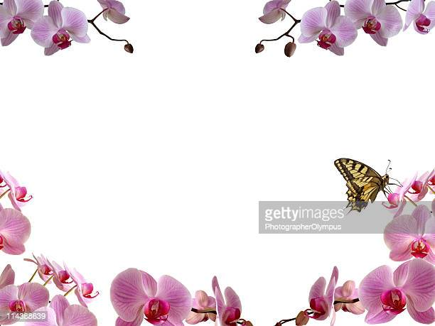 Butterfly on orchid window