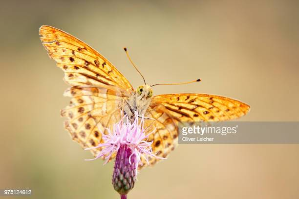 Butterfly on pink flower in bloom