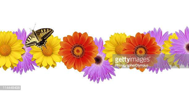 Butterfly on spring flower border