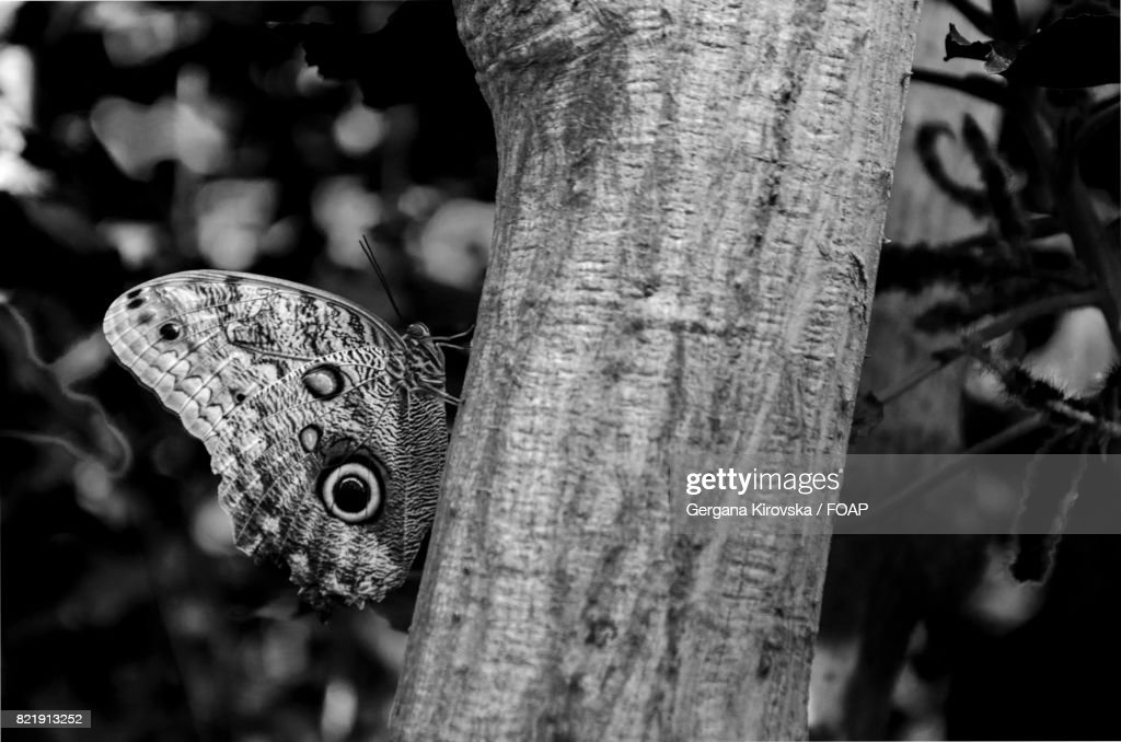 Butterfly on tree : Stock Photo