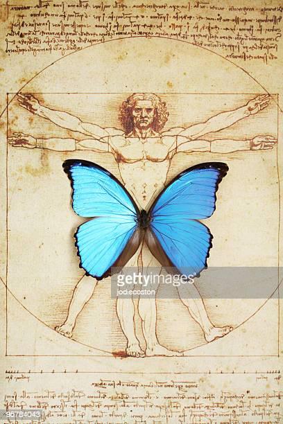Schmetterling auf Vitruvischer Mann