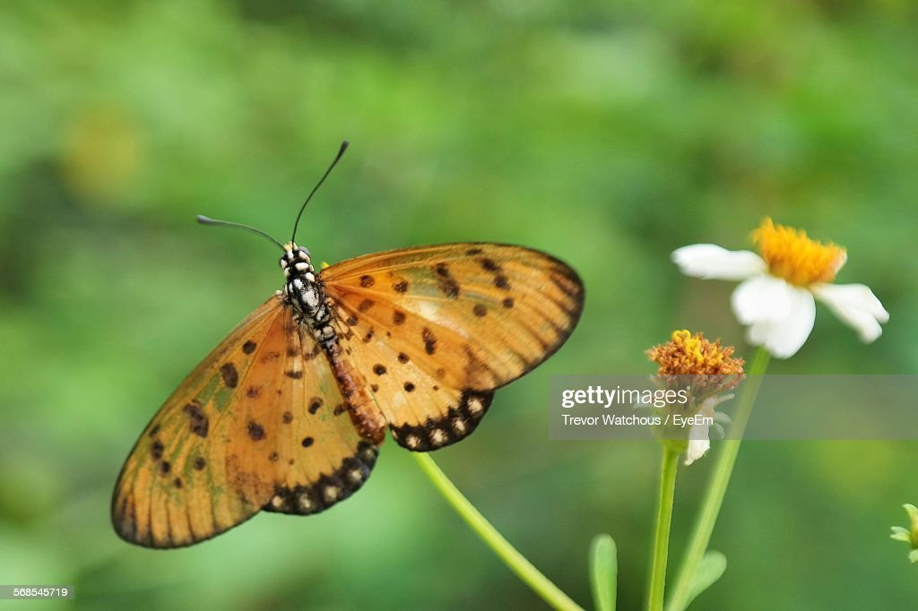 Butterfly On White Flower : Stock Photo