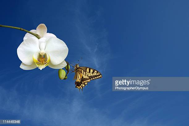 Butterfly on white orchids blossom