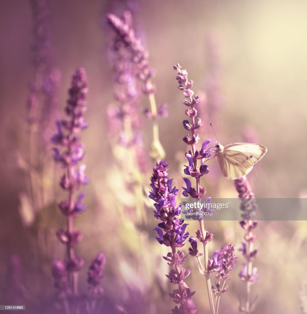 Butterfly on wildflower : Bildbanksbilder