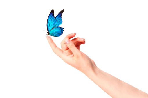 butterfly on woman's hand. In motion 462314359