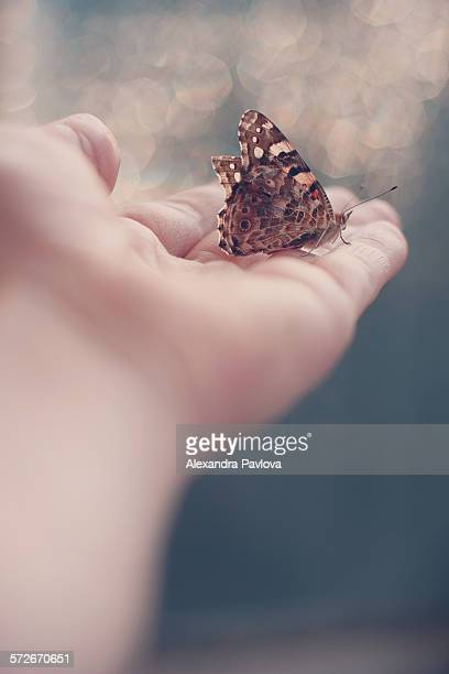 butterfly on woman's hand - releasing stock photos and pictures