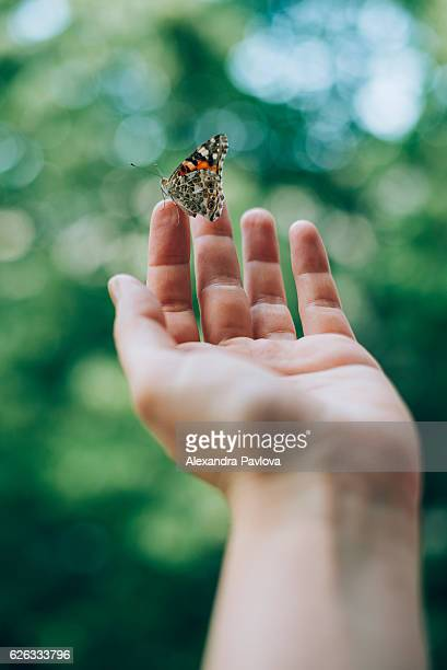 butterfly on woman's hand - releasing stock pictures, royalty-free photos & images