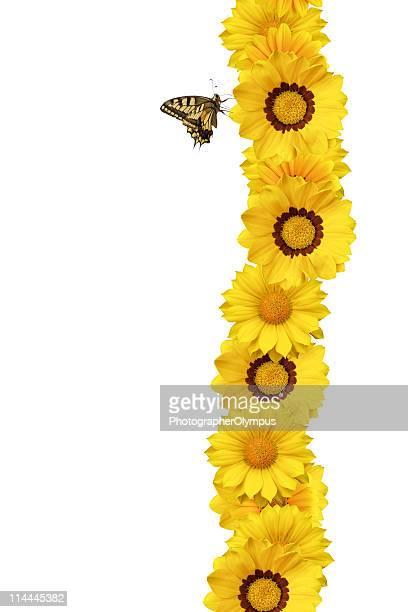 gialla farfalla sul fiore bordo xxxl - farfalla a coda di rondine foto e immagini stock