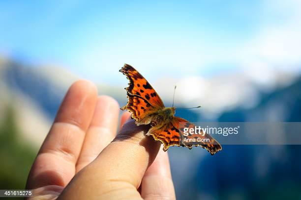 butterfly perched on human hand outdoors - releasing stock pictures, royalty-free photos & images
