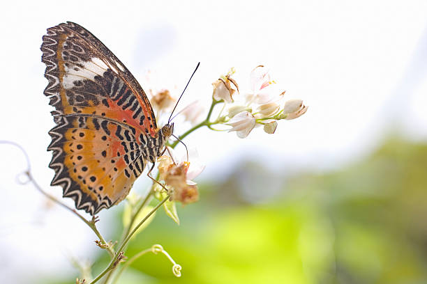 Butterfly perched on stem of flower, taking nectar