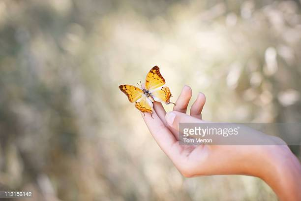 Butterfly perched on womans hand