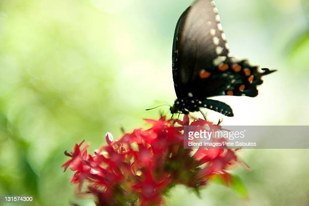 Butterfly perching on blooming flower