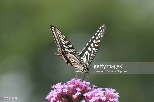 butterfly perching on plant - 花粉 ストックフォトと画像