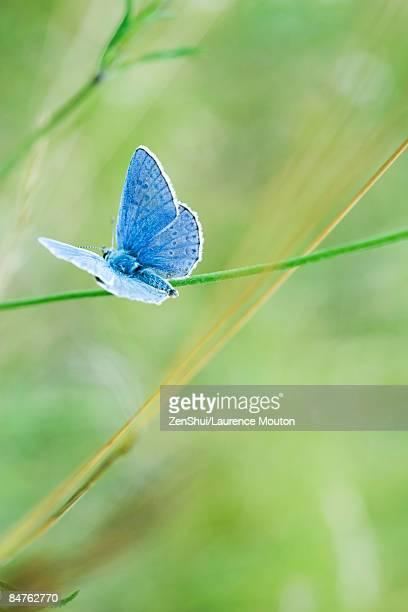Butterfly perching on stem