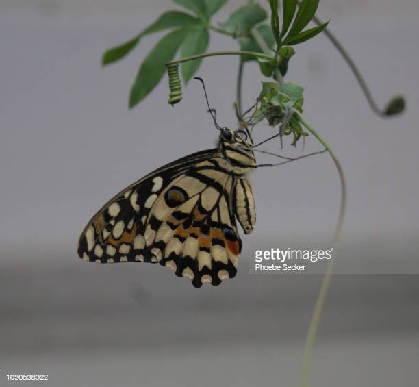 butterfly - animal markings stock pictures, royalty-free photos & images