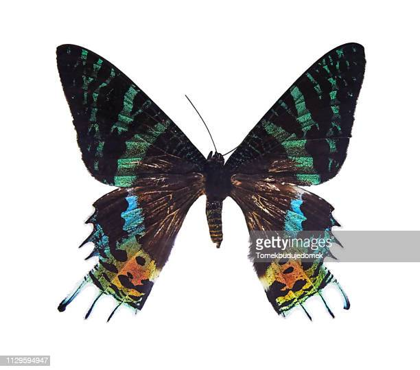 butterfly - nahaufnahme stock pictures, royalty-free photos & images
