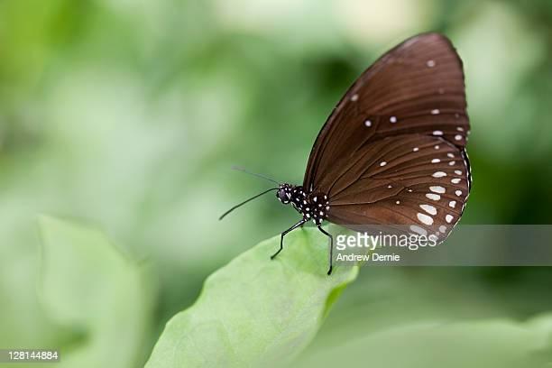 butterfly - andrew dernie - fotografias e filmes do acervo