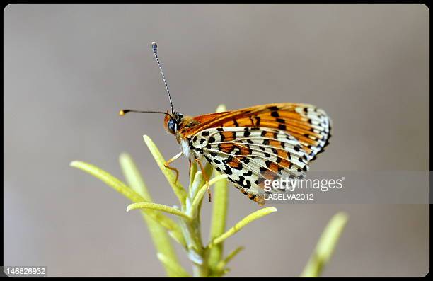 butterfly - united_states_senate_election_in_virginia,_2012 stock pictures, royalty-free photos & images