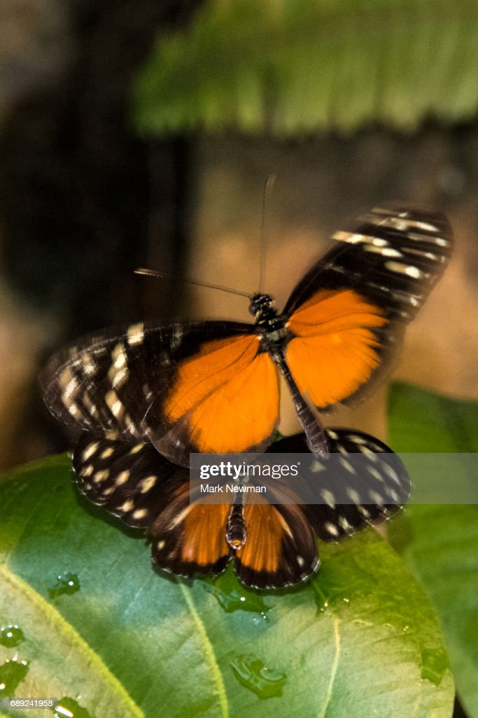 Butterfly : Stock Photo