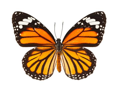 Butterfly 899279224