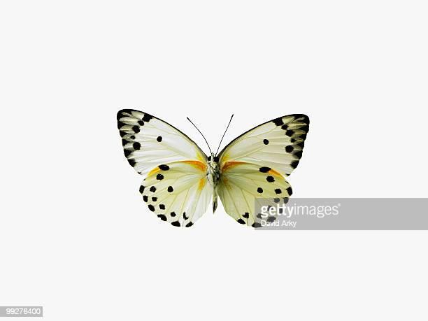 butterfly - vlinder stockfoto's en -beelden