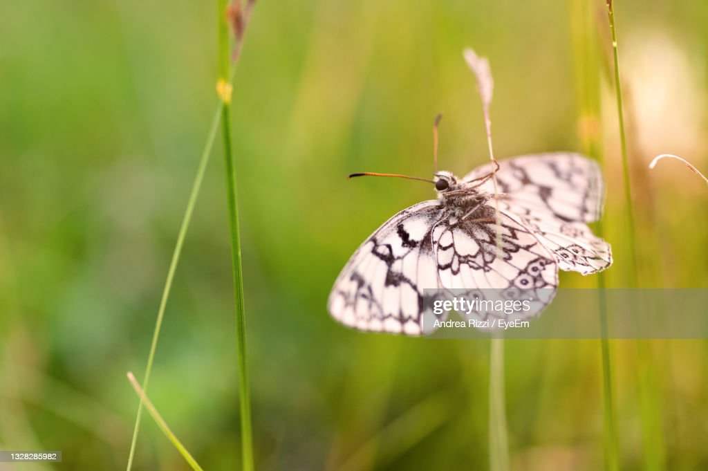 Butterfly Pollinating Flower In Spring : Foto stock