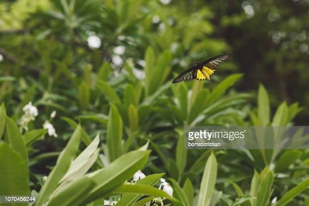 butterfly pollinating flower - bortes stock-fotos und bilder