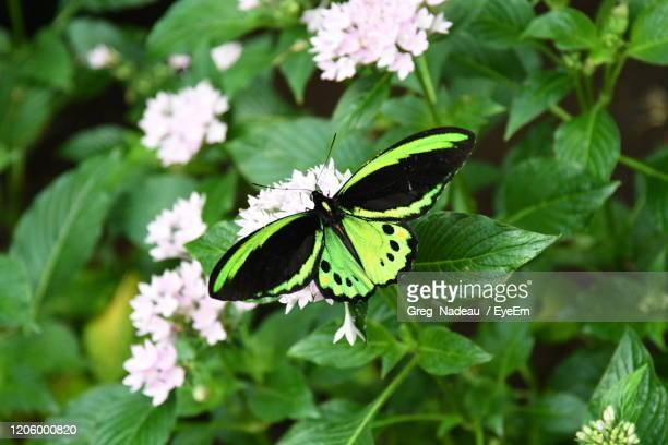butterfly pollinating on flower - greg nadeau stock pictures, royalty-free photos & images