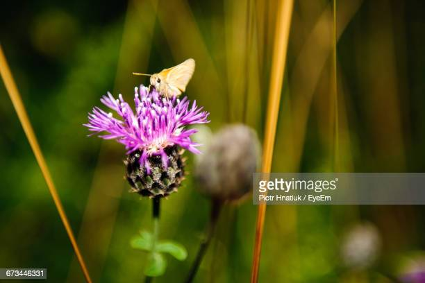 Butterfly Pollinating On Pink Flower At Park