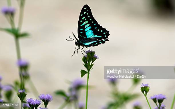 butterfly pollinating on purple flower - 止まる ストックフォトと画像